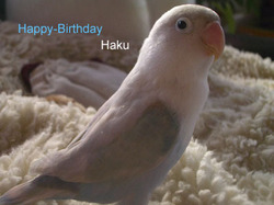 Haku331