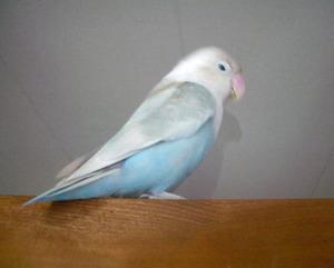 Haku581