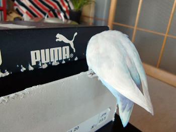 Haku824