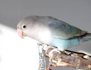 Haku1078