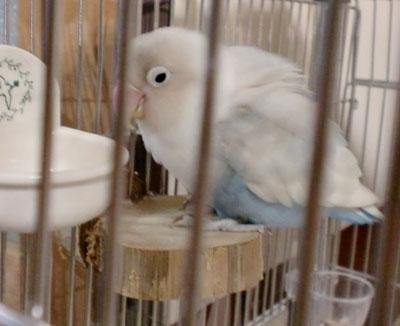 Haku1588