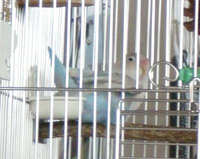 Haku1660
