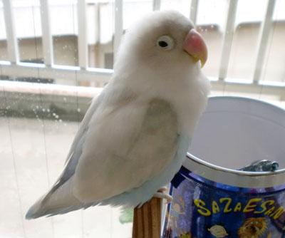 Haku2069