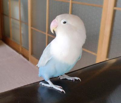 Haku2206