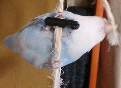 Haku162