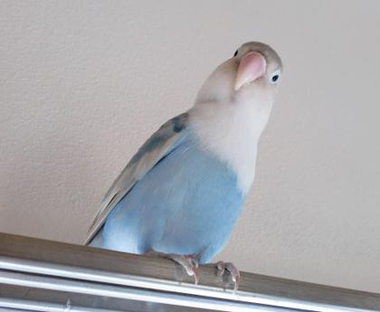 Haku381