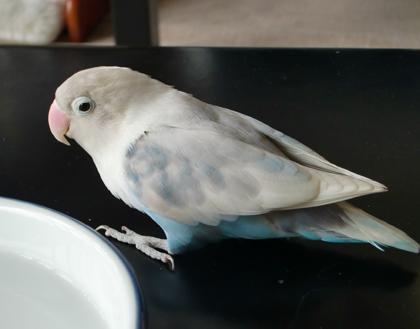 Haku438