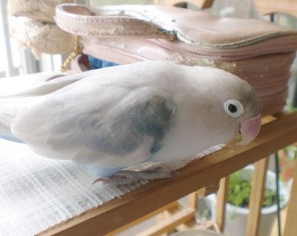 Haku496