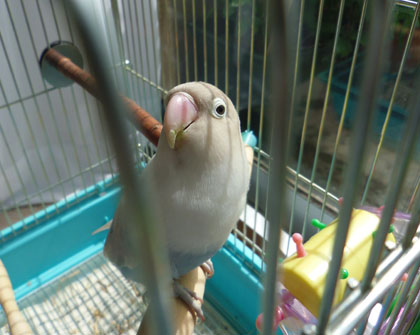 Haku642