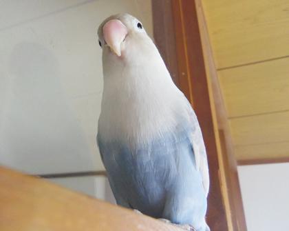 Haku1174