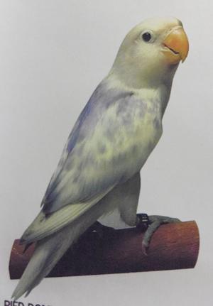 Haku1297