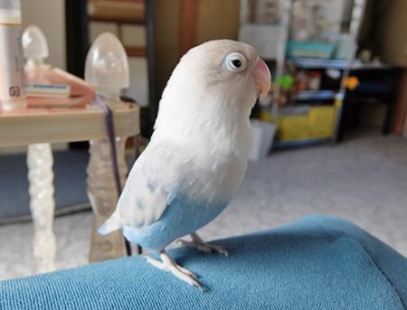 Haku305